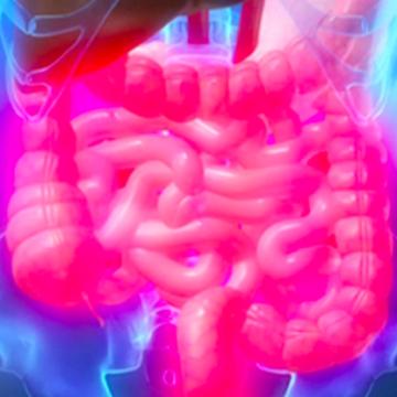 La microbiota regula la respuesta inmunitaria del organismo frente a…