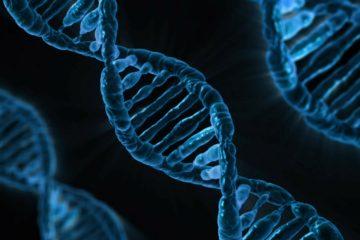 Identifican un mutación que mejorará la seguridad de los tratamientos para la enfermedad…