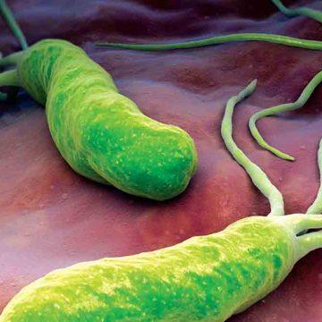 Publicado el nuevo consenso de terapia en 'Helicobacter pylori'