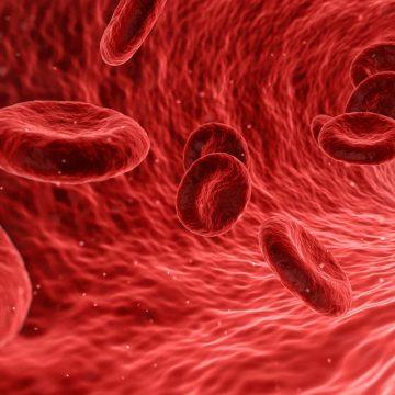 Un nuevo estudio desinfla el 'poder rejuvenecedor' del plasma joven