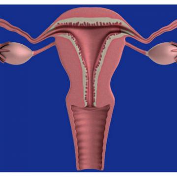 Identificado el origen de la mayoría de los cánceres de…