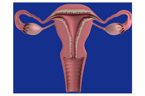 Identificado el origen de la mayoría de los cánceres de ovario: las trompas de Falopio