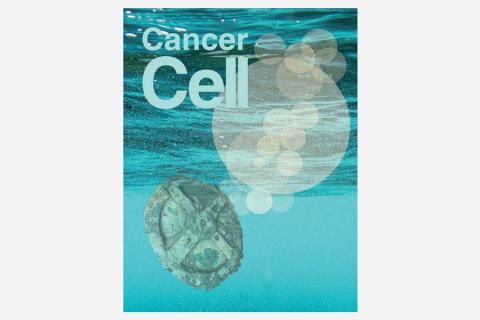 Fibroblast Heterogeneity and Immunosuppressive Environment in Human Breast Cancer