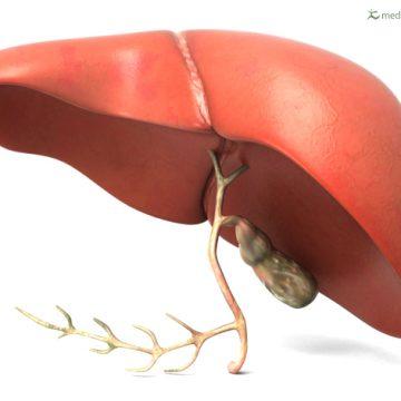 El avance tecnológico mejora la viabilidad de los hígados grasos