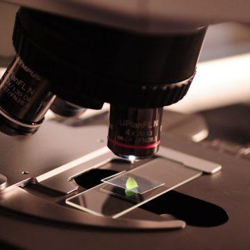 Las células madre intestinales dan pistas para evitar tumores hereditarios