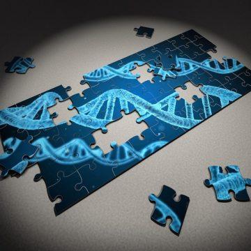 Descubren mutaciones en un gen no codificante presentes en varios…