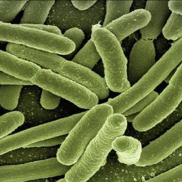 La confusión entre gluten y bacterias, posible origen de la…