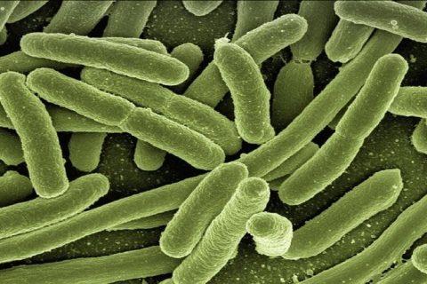 La confusión entre gluten y bacterias, posible origen de la celiaquía