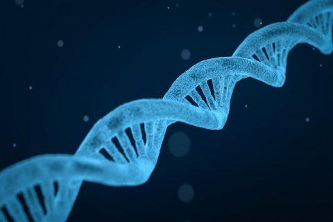 Un ensayo piloto avala la triple edición genética con CRISPR en linfocitos T de pacientes con cáncer