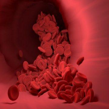 Descubren la clave para producir células madre de la sangre