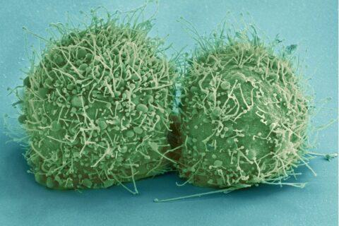 La microbiota juega un papel fundamental en la salud de la persona