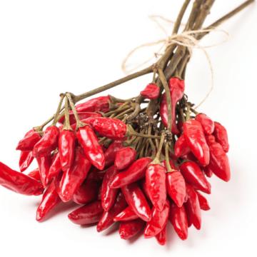 Los pimientos picantes podrían ser útiles en el trasplante de…