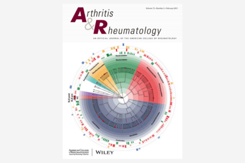 Allele‐Specific Quantification of HLA–DRB1 Transcripts Reveals Imbalanced Allelic Expression That Modifies the Amino Acid Effects in HLA–DRβ1
