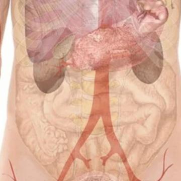 ¿Cómo influye el microbioma intestinal en la gravedad y la…