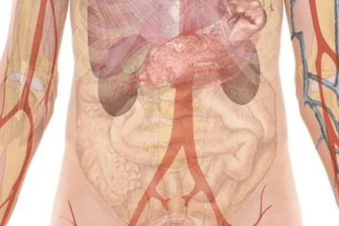 ¿Cómo influye el microbioma intestinal en la gravedad y la respuesta al Covid-19?