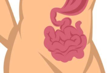 Descubren el mecanismo que causa el síndrome del intestino irritable