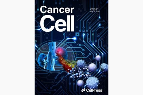 Single-cell sequencing links multiregional immune landscapes and tissue-resident T cells in ccRCC to tumor topology and therapy efficacy